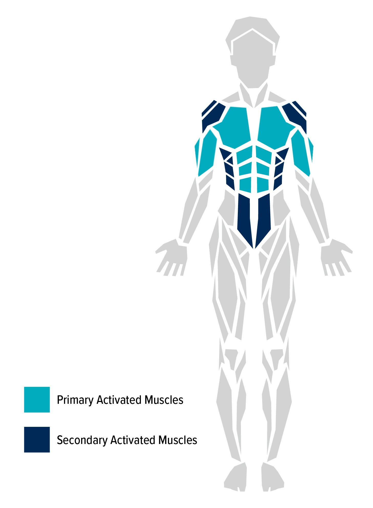 The human body and some of its muscles. Primary and secondary muscles worked by a push-up are highlighted.