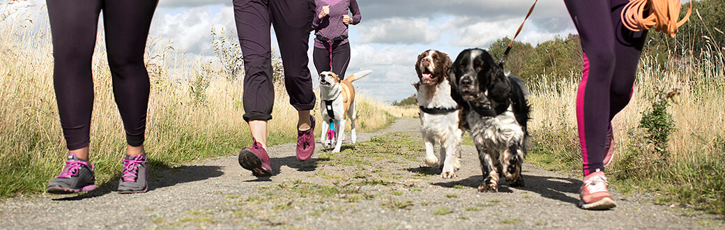 How You And Your Pet Can Take the Fitness Journey Together